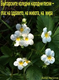 Българските коледни народни песни – глас на здравето, на живота, на мира